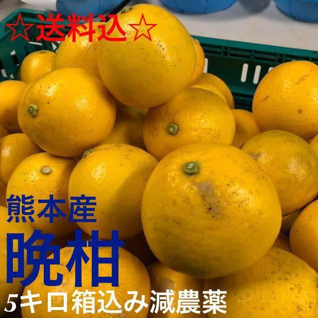 【送料込】熊本産河内晩柑5キロ箱込み減農薬☆