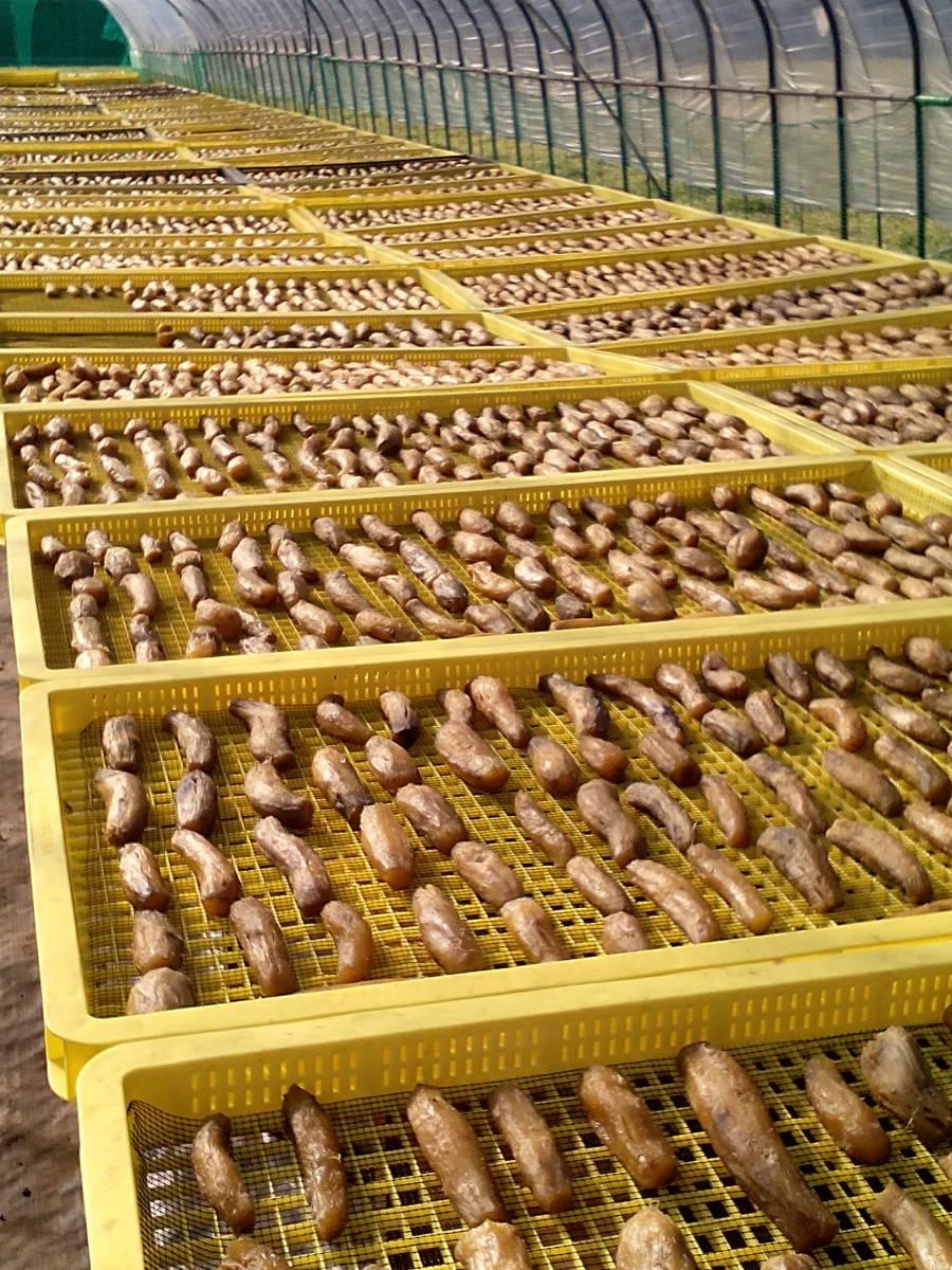 茨城県ひたちなか市産 干し芋 1kg 希少品種「いずみ」 丸干し 訳ありのため1円~★☆★☆★