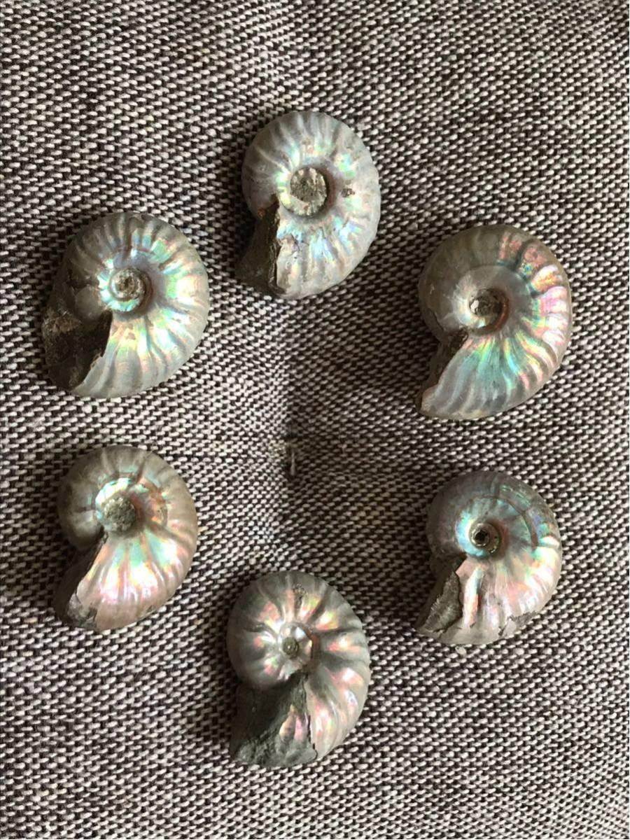 マダガスカル産 遊色虹色アンモナイト-白(クリオニセラス)、格安、3-6g/3.0cm以下20個セット、合計97g、1円スタート、一部欠けあり_画像3