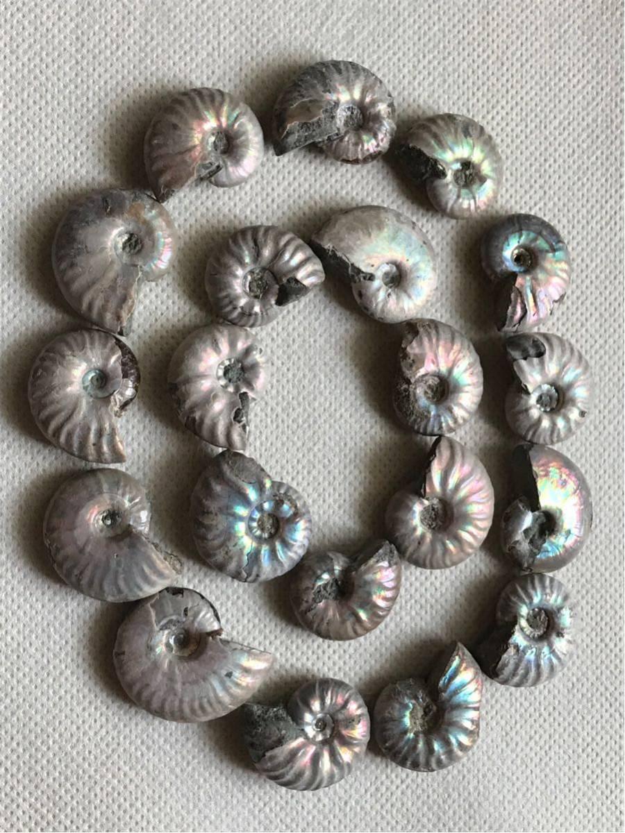 マダガスカル産 遊色虹色アンモナイト-白(クリオニセラス)、格安、3-6g/3.0cm以下20個セット、合計97g、1円スタート、一部欠けあり