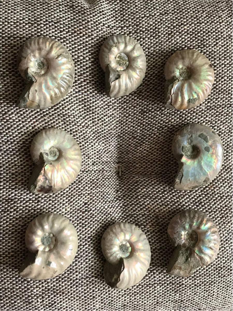 マダガスカル産 遊色虹色アンモナイト-白(クリオニセラス)、格安、3-6g/3.0cm以下20個セット、合計97g、1円スタート、一部欠けあり_画像4