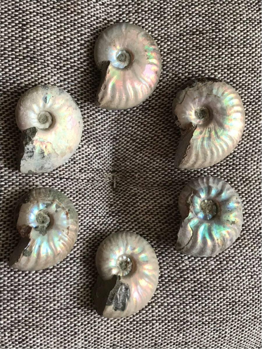 マダガスカル産 遊色虹色アンモナイト-白(クリオニセラス)、格安、3-6g/3.0cm以下20個セット、合計97g、1円スタート、一部欠けあり_画像2