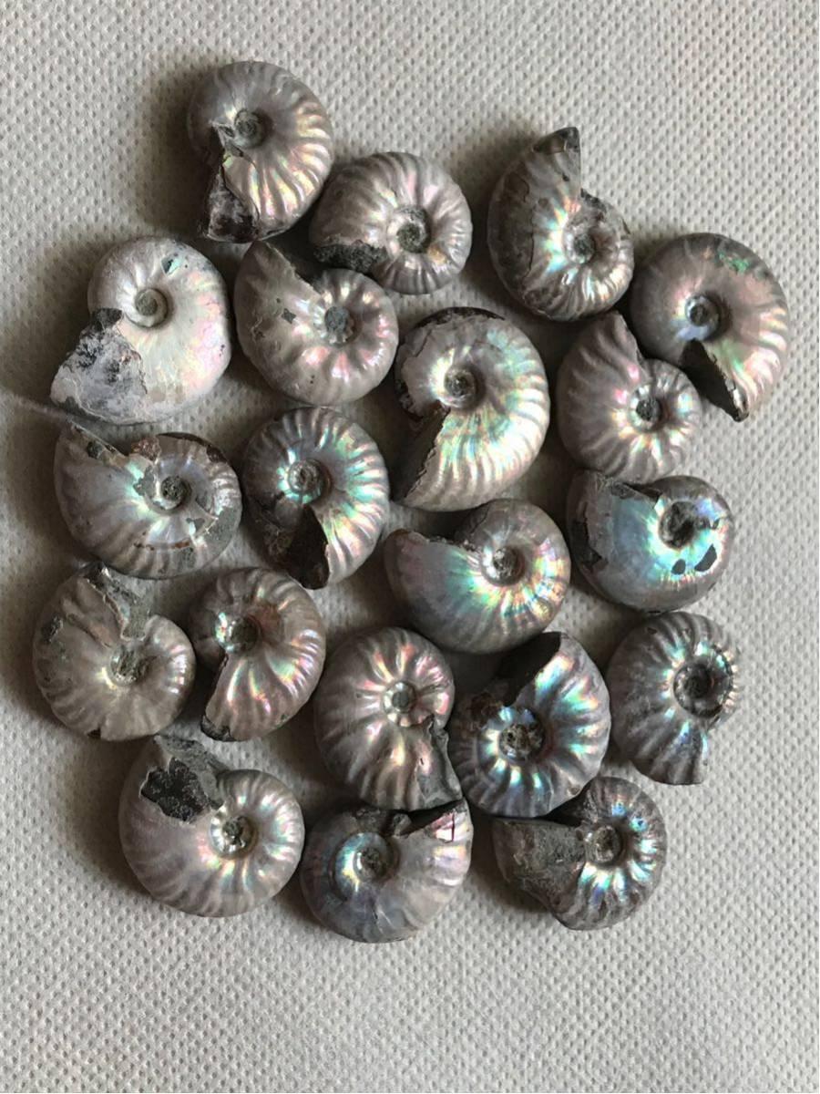 マダガスカル産 遊色虹色アンモナイト-白(クリオニセラス)、格安、3-6g/3.0cm以下20個セット、合計97g、1円スタート、一部欠けあり_画像5