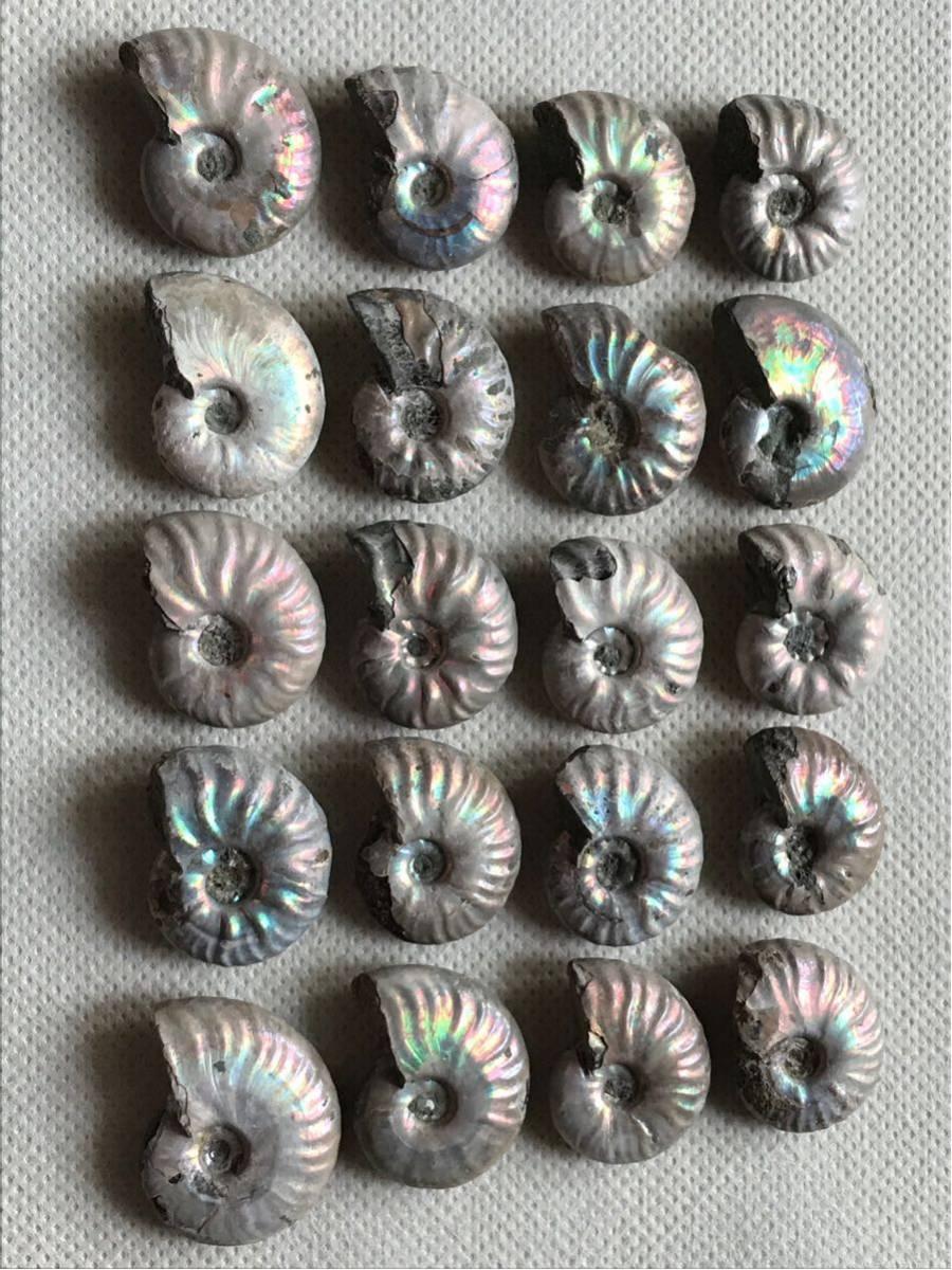 マダガスカル産 遊色虹色アンモナイト-白(クリオニセラス)、格安、3-6g/3.0cm以下20個セット、合計97g、1円スタート、一部欠けあり_画像7