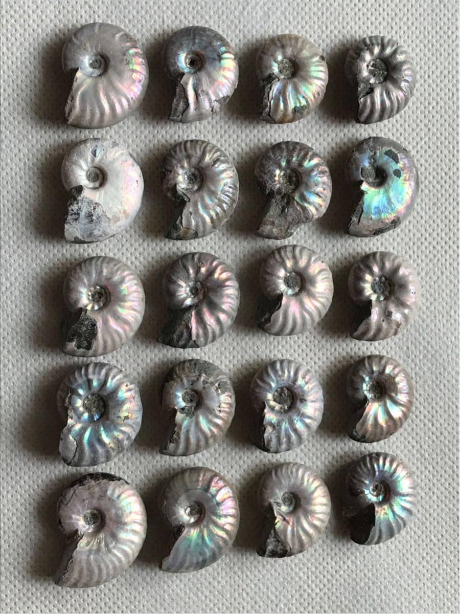 マダガスカル産 遊色虹色アンモナイト-白(クリオニセラス)、格安、3-6g/3.0cm以下20個セット、合計97g、1円スタート、一部欠けあり_画像6