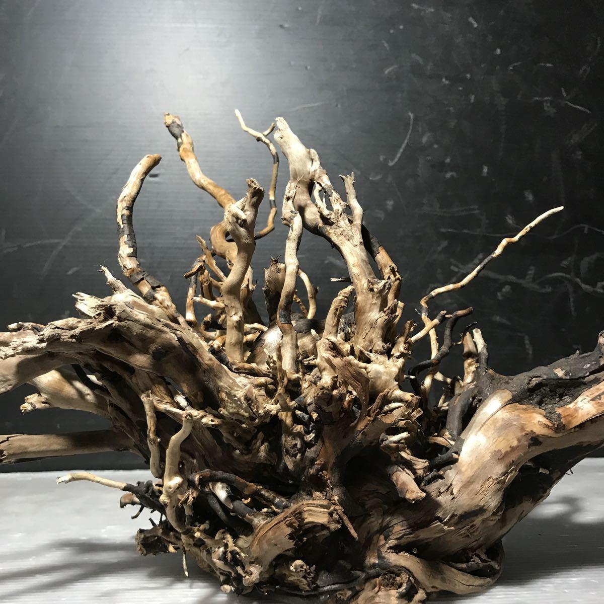 ☆sea tree☆煮沸消毒済み流木 ブランチ流木/水槽/アクアリウム/テラリウム/インテリア/ADA/サンゴ/置物_画像6