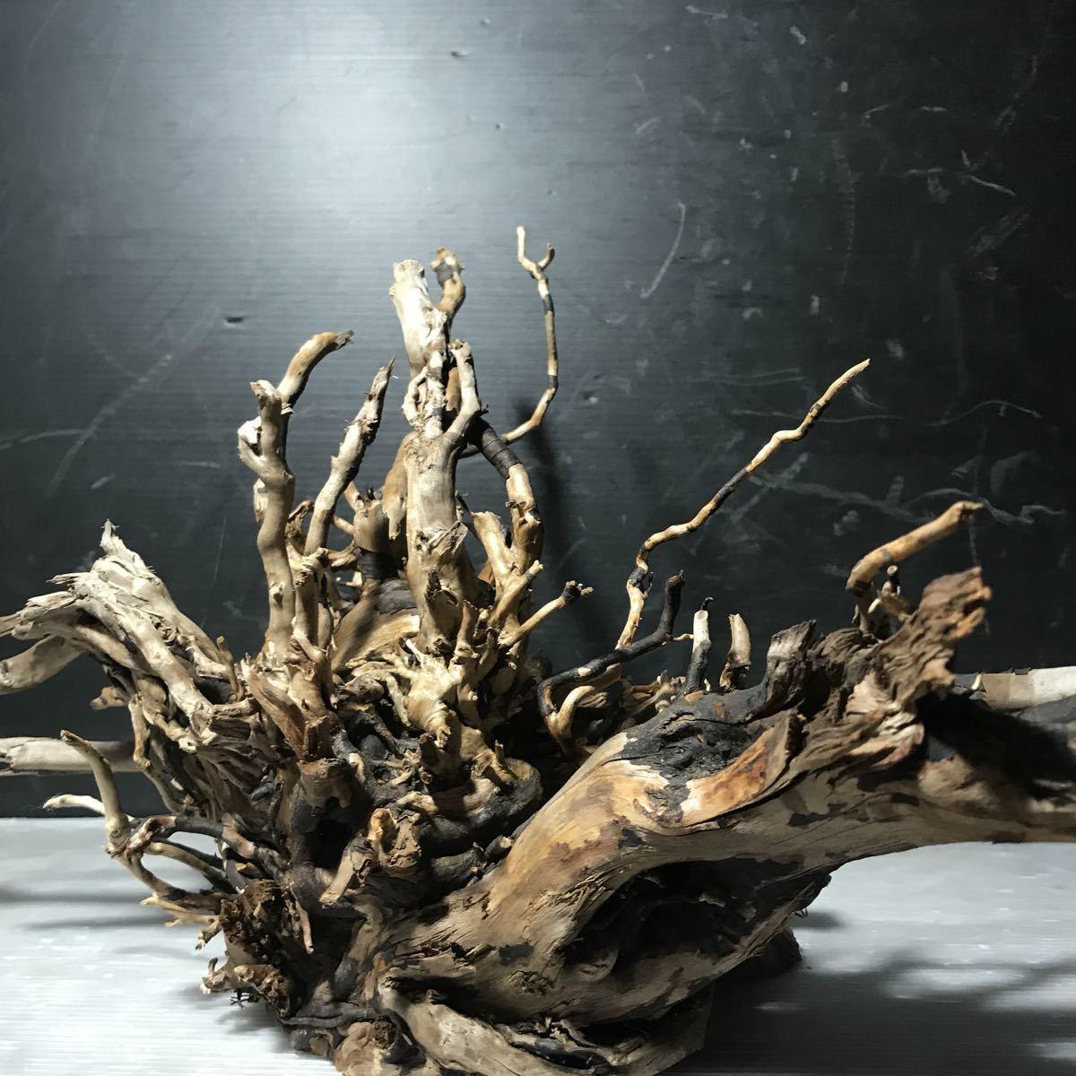 ☆sea tree☆煮沸消毒済み流木 ブランチ流木/水槽/アクアリウム/テラリウム/インテリア/ADA/サンゴ/置物_画像5