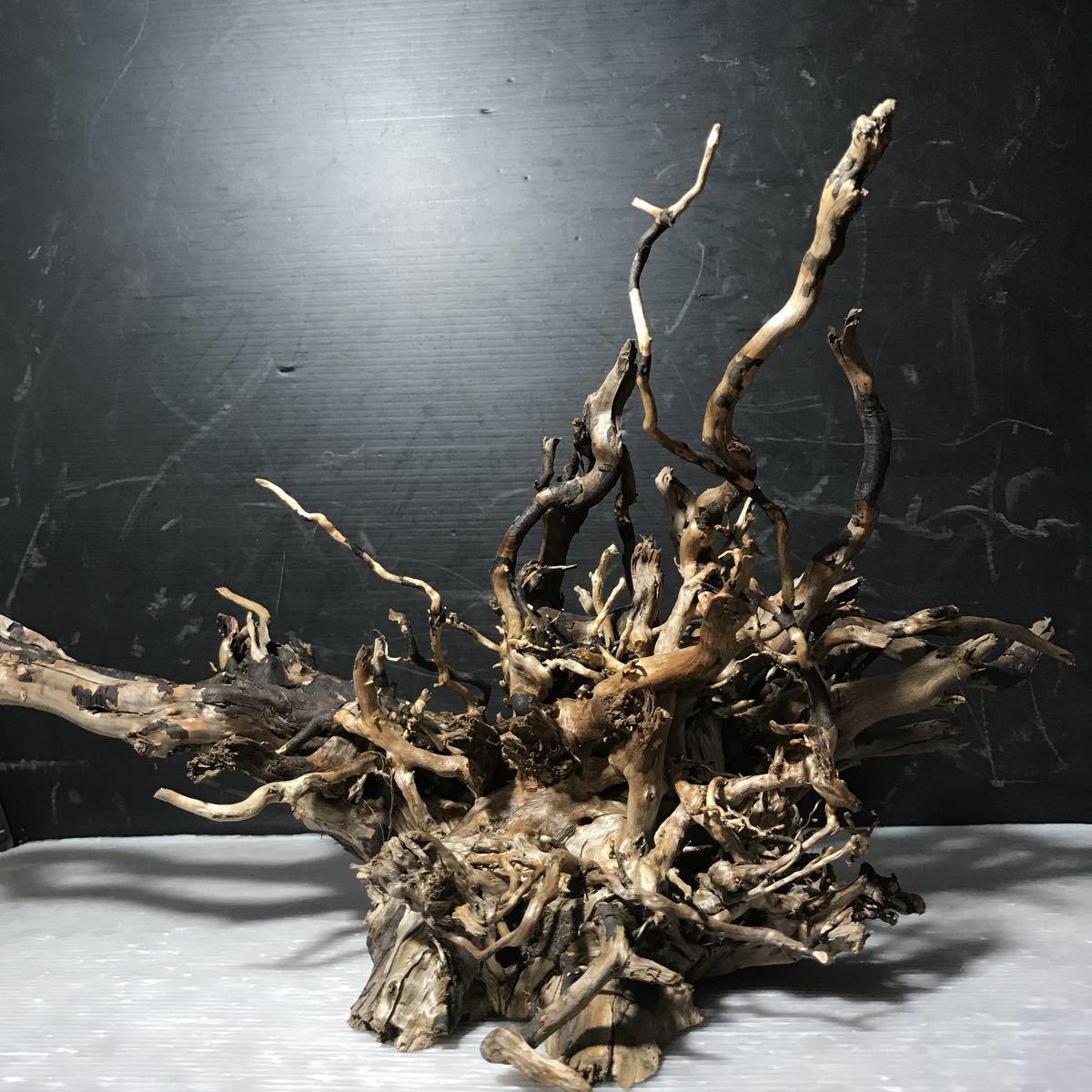 ☆sea tree☆煮沸消毒済み流木 ブランチ流木/水槽/アクアリウム/テラリウム/インテリア/ADA/サンゴ/置物