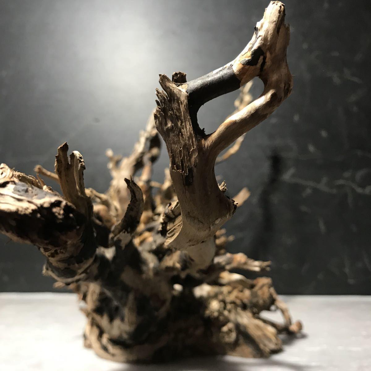 ☆sea tree☆煮沸消毒済み流木 ブランチ流木/水槽/アクアリウム/テラリウム/インテリア/ADA/サンゴ/置物_画像4