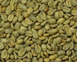 【10㎏】コーヒー生豆 東ティモール サントモンテ JAS 生豆 プレミアムコーヒー 自家焙煎 カフェ 送料無料_画像1