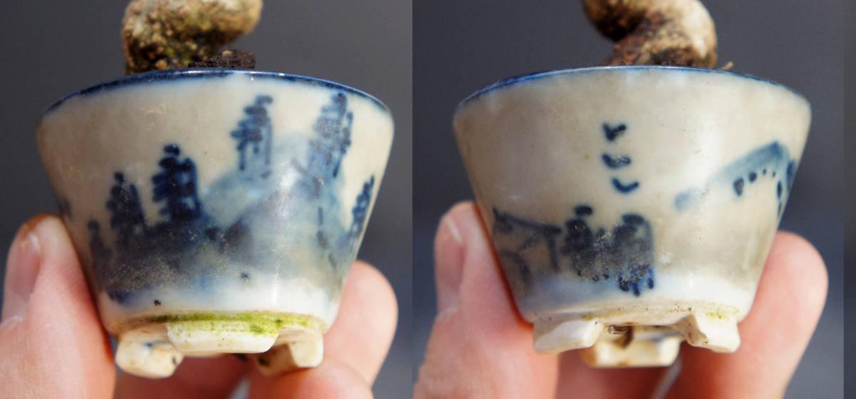 楓 ミニ盆栽 奥行10.5cm 横幅12cm 高さ12.5cm_画像9