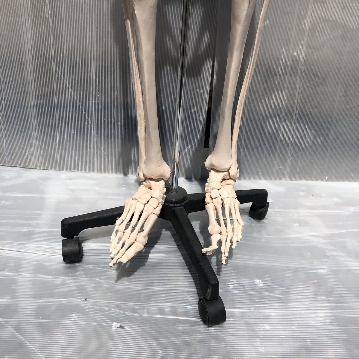 【美品】人体模型 骨格模型 骨格標本 等身大 ヒューマンスカル ガイコツ スカル 約165cm 医学 実験 骸骨 ジャンク 直接取引可能(矢199)_画像6