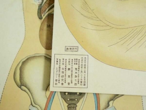 戦前 大正14年「女体解剖模型図」資料 生理研究会 荒木骸笑考案 妊娠中血液循環図 医術 医学資料 珍品_画像4