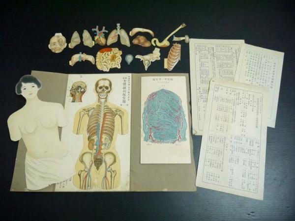 戦前 大正14年「女体解剖模型図」資料 生理研究会 荒木骸笑考案 妊娠中血液循環図 医術 医学資料 珍品
