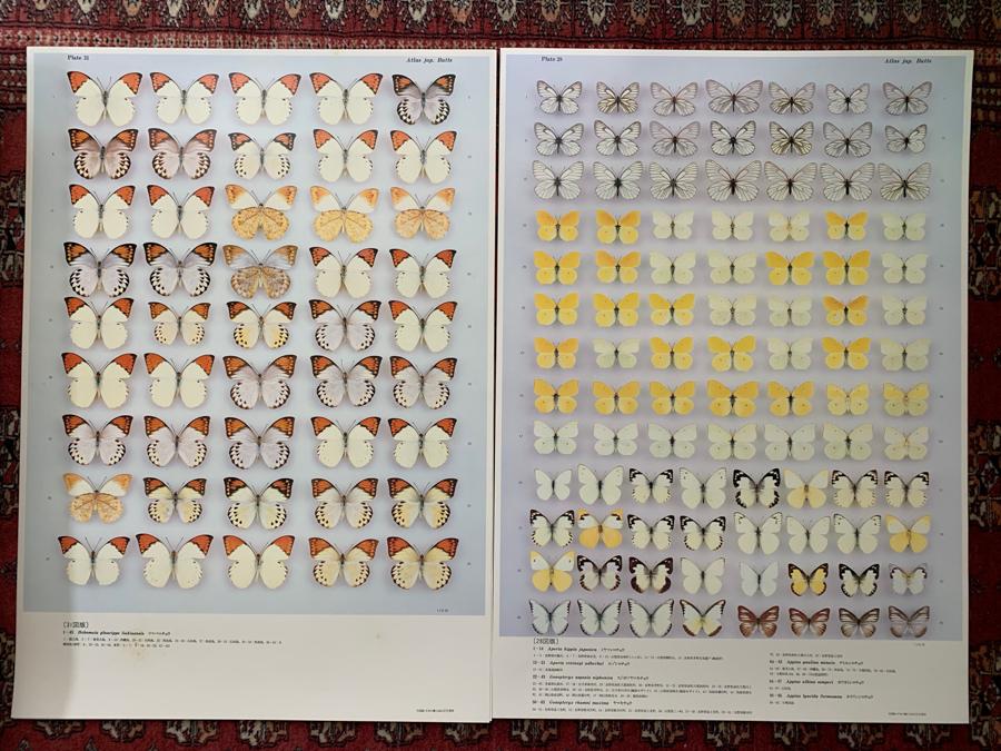 大図録 日本の蝶 竹書房 大型原色図版 猪又敏男 ハードケース付 昭和60年 昆虫 博物学 d415_画像3