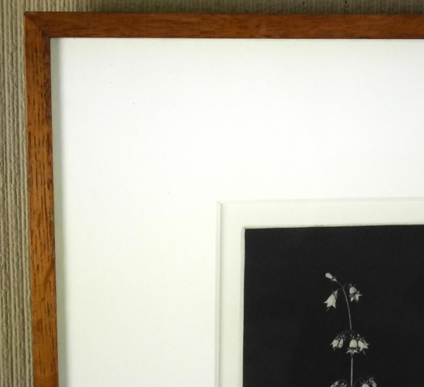 藤江彰『スズラン』◆銅版画◆直筆サイン有◆限定50版!人気作家!多数個展_画像5