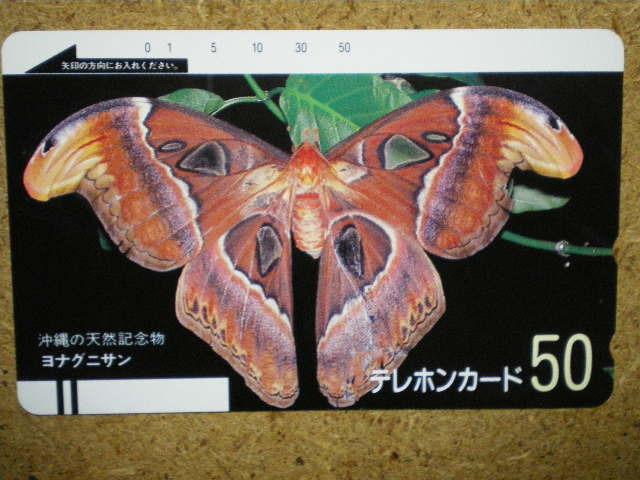 doub・330-3212 沖縄 天然記念物 ヨナグニサン 蝶 未使用 50度数 テレカ_画像1