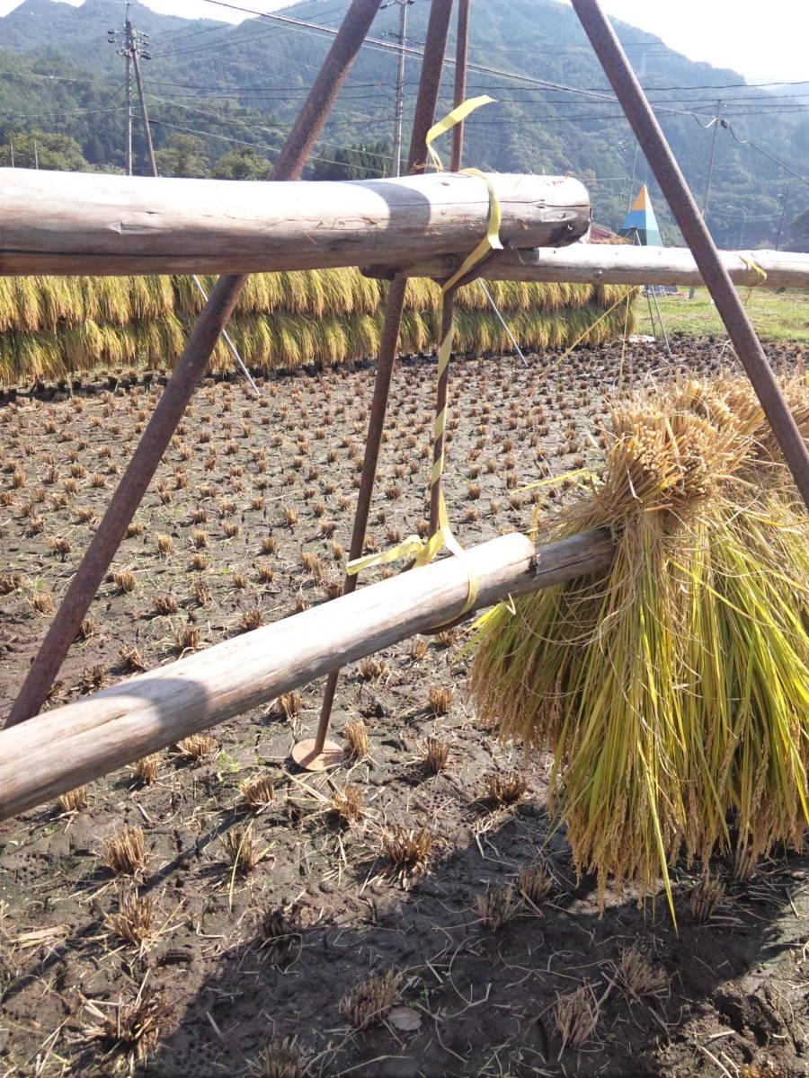 飛騨高山産コシヒカリ 白米 10kg 綺麗な水、綺麗な空気、荒い植の為大粒