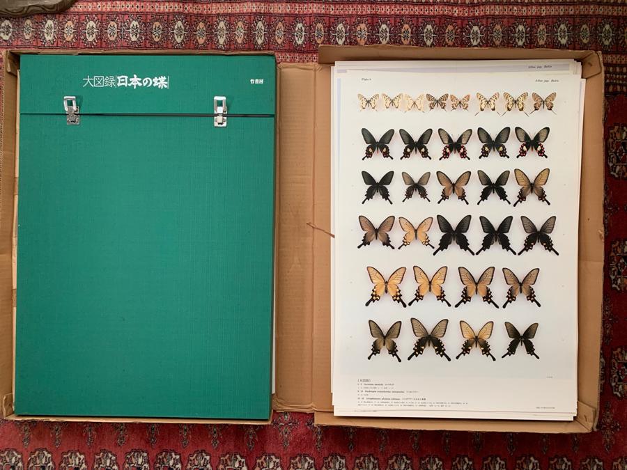 大図録 日本の蝶 竹書房 大型原色図版 猪又敏男 ハードケース付 昭和60年 昆虫 博物学 d415