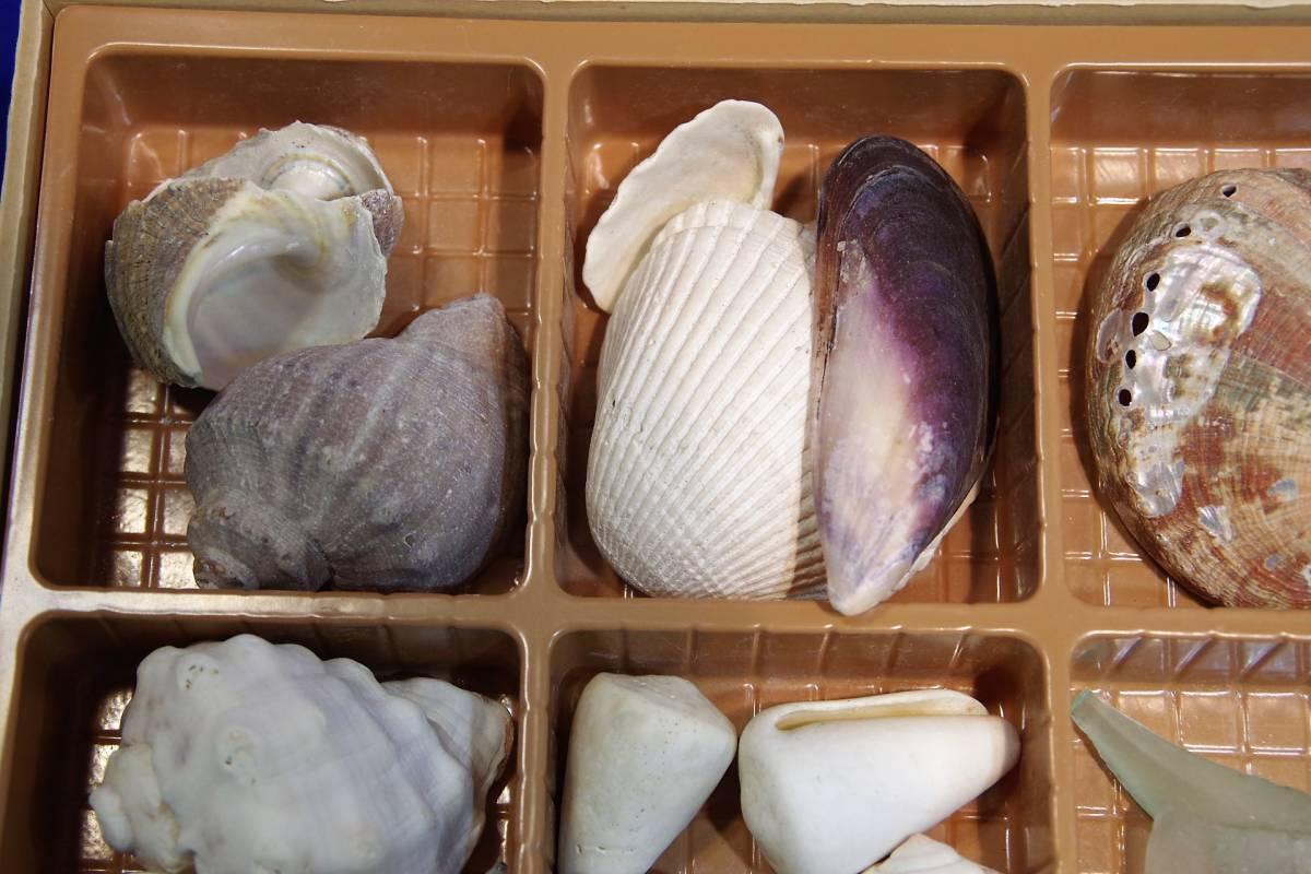 貝殻まとめて ビーチコーミング 宿題 工作 アクセサリー 手作り 水槽  標本 ウニ_画像5