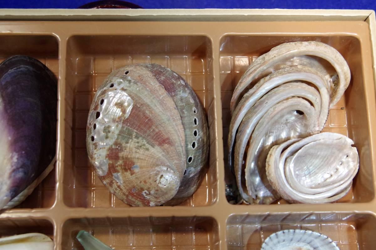 貝殻まとめて ビーチコーミング 宿題 工作 アクセサリー 手作り 水槽  標本 ウニ_画像4