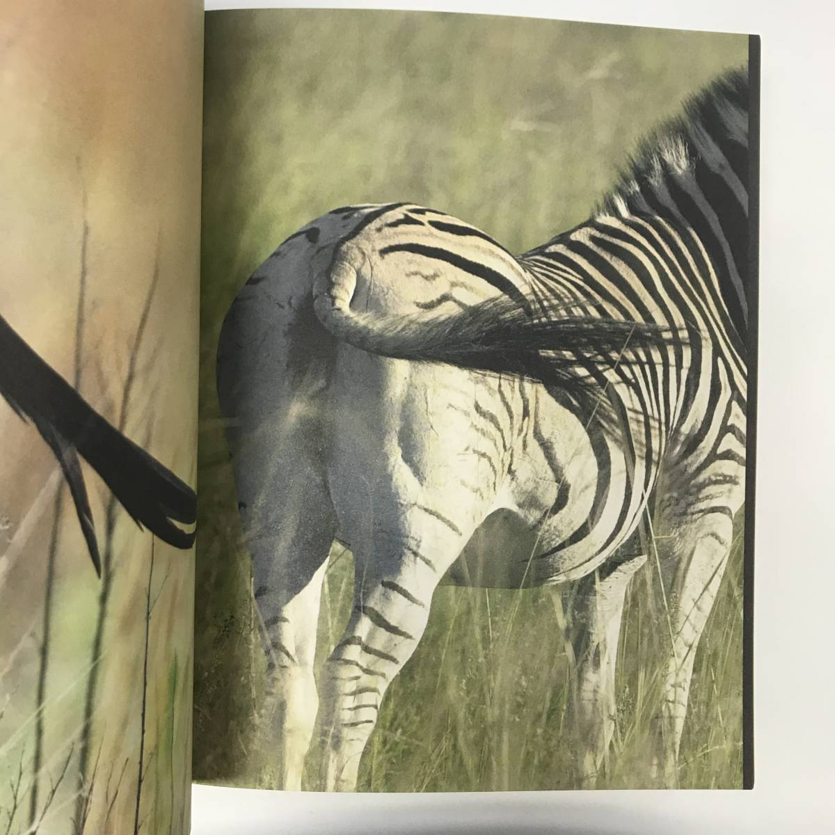 洋書 写真集 Marakele The Making of a South African National Park gg00531_k4_画像4