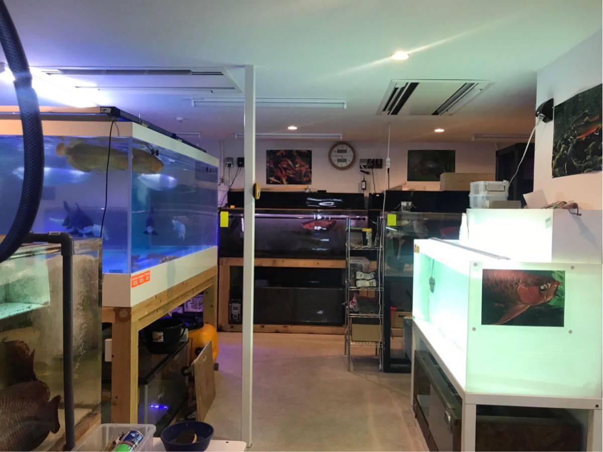 滋賀 AQUAFISH 熱帯魚、爬虫類、水槽、その他、販売買取_画像2