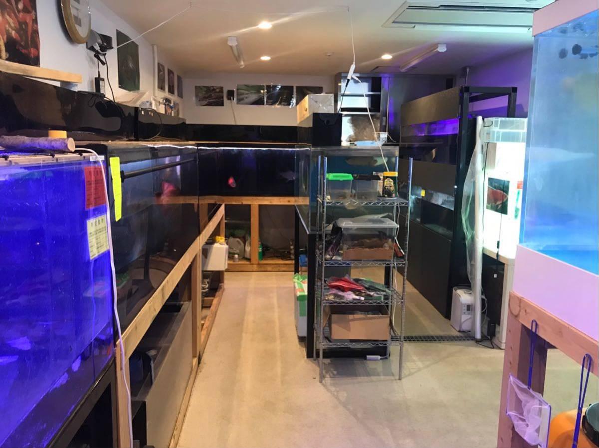 滋賀 AQUAFISH 熱帯魚、爬虫類、水槽、その他、販売買取