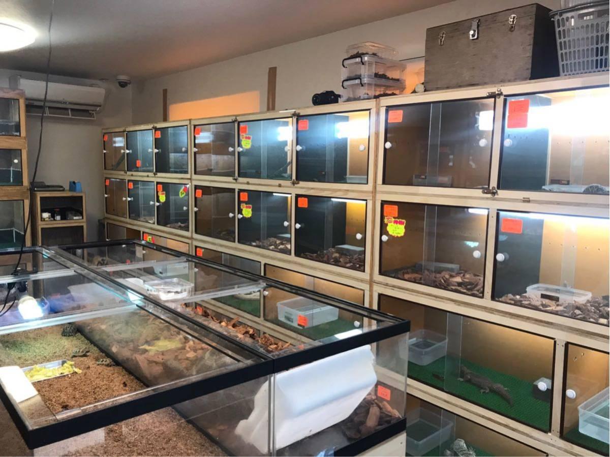 滋賀 AQUAFISH 熱帯魚、爬虫類、水槽、その他、販売買取_画像7
