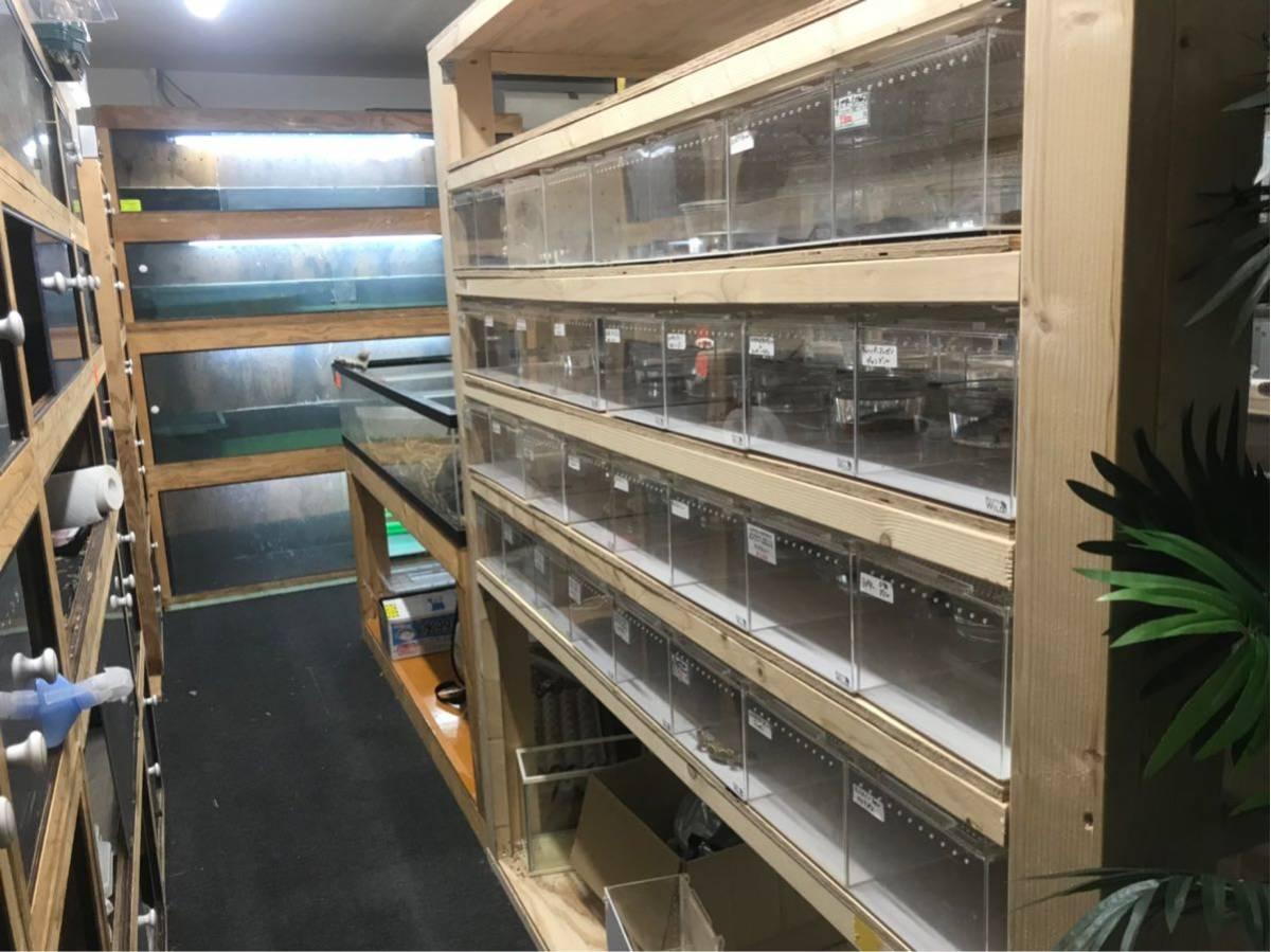 滋賀 AQUAFISH 熱帯魚、爬虫類、水槽、その他、販売買取_画像8