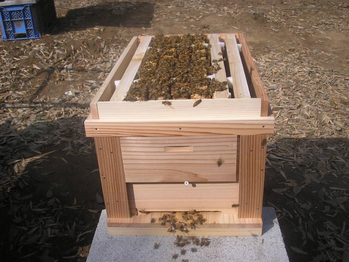 ◎◇★西洋蜜蜂 ミツバチ 5枚群  新女王 9