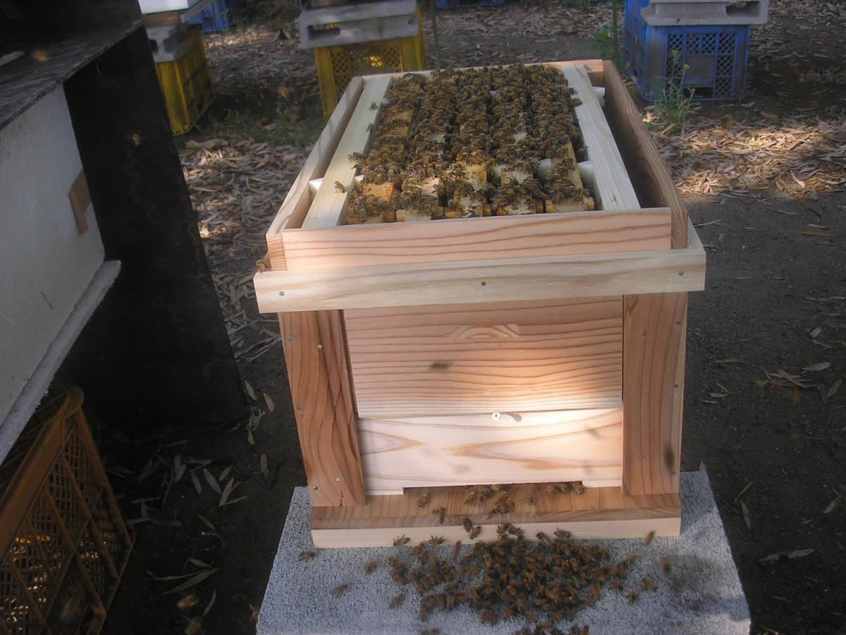 ◎◇★西洋蜜蜂 ミツバチ5枚群 新女王10