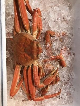 【カニ】ずわい蟹 ズワイカニ 7ハイ/4.5キロ/ケース 青森県・むつ湾産【魚介類】
