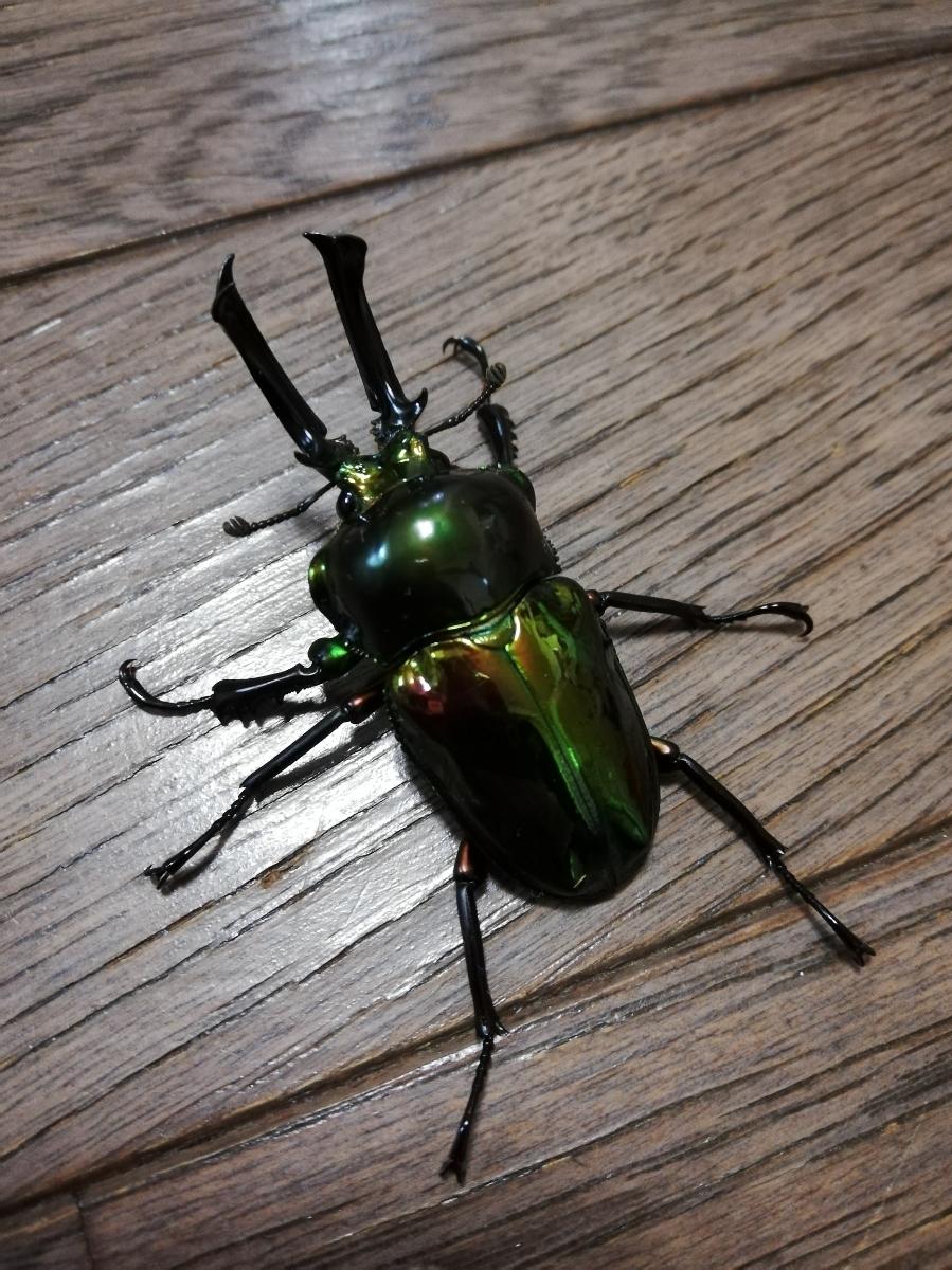 【hiiro】ピカール血統 × グリーン ニジイロクワガタ 初令2令 幼虫 4匹セット 菌糸入
