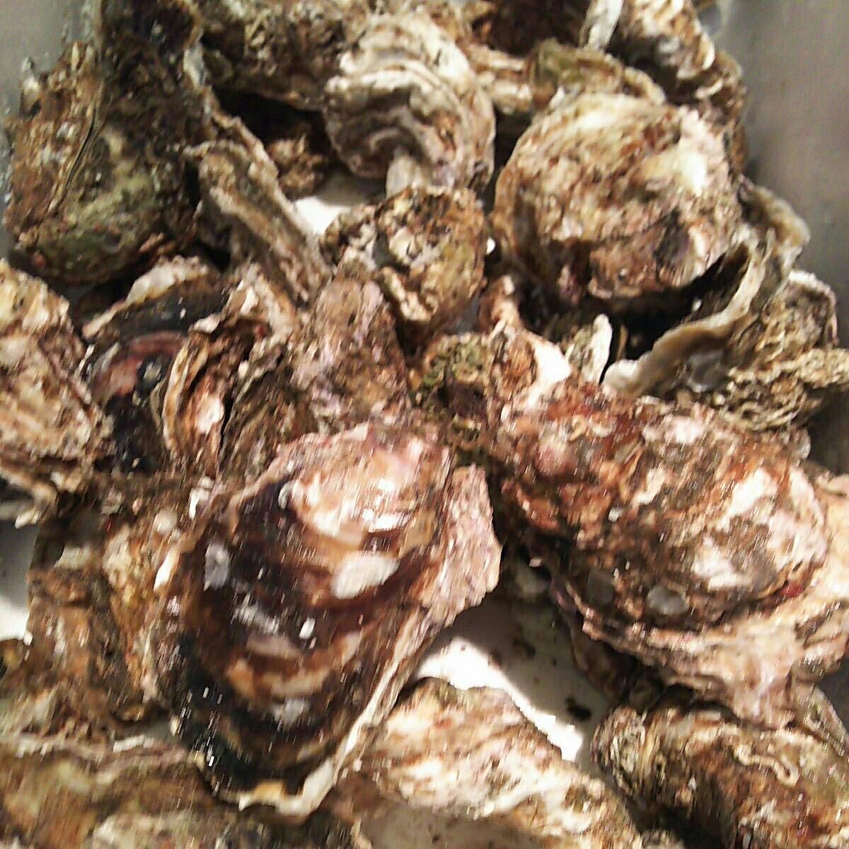 天然岩牡蠣6.5キロ一箱。普通サイズ。普通でも水牡蠣よりも大きい岩牡蠣です。_画像3