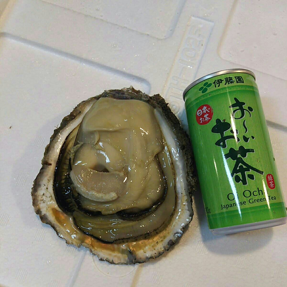 天然岩牡蠣6.5キロ一箱。普通サイズ。普通でも水牡蠣よりも大きい岩牡蠣です。_画像5