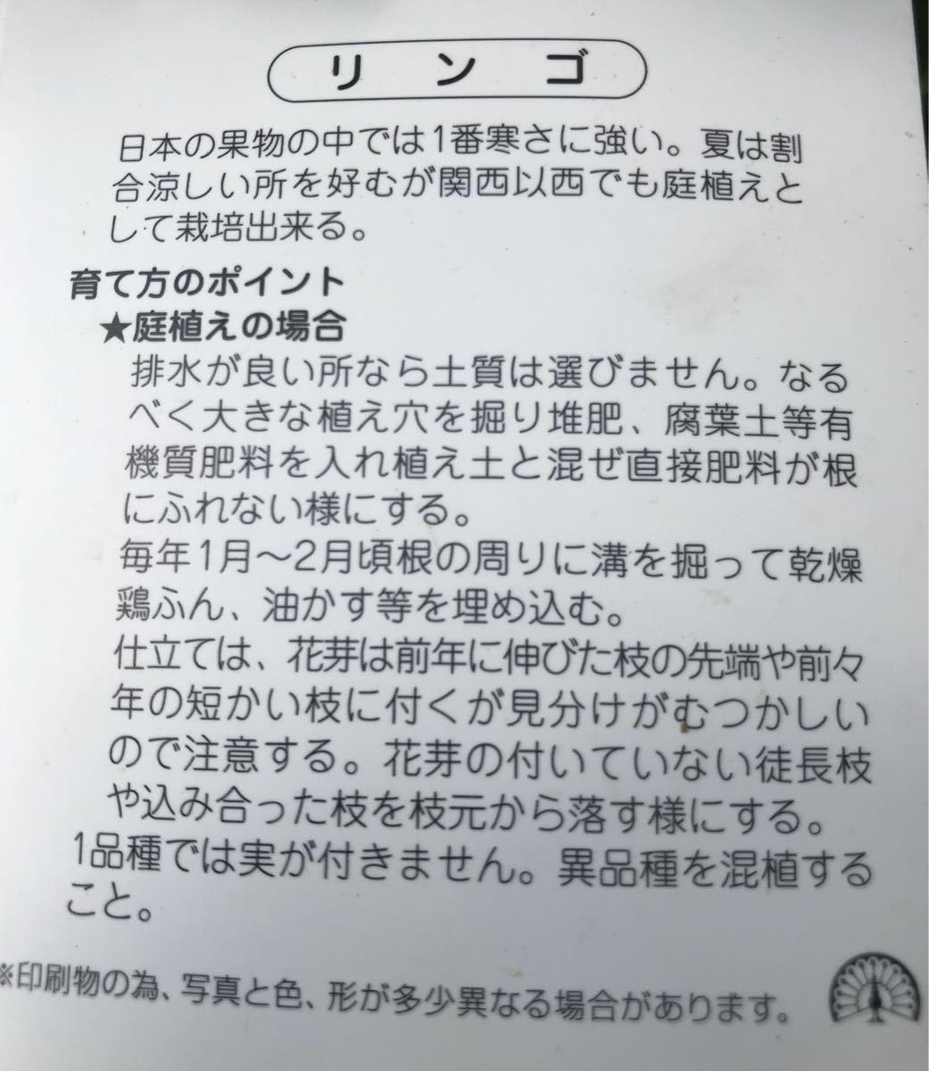 王林りんご苗木_画像2