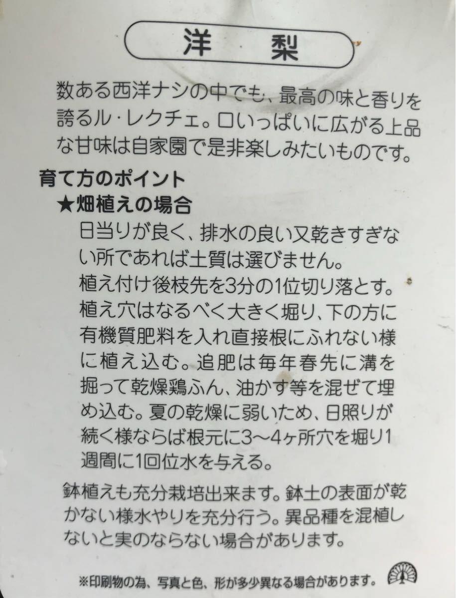 洋梨 ルレクチェ苗木_画像2