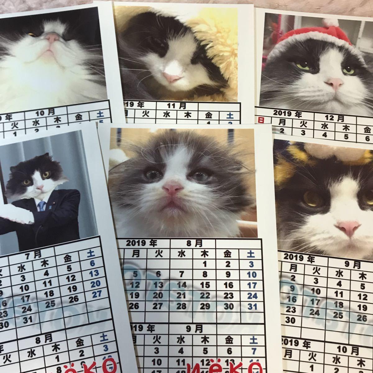 1円スタート!猫(コタロー)カレンダー下半期 めっちゃかわいい!ネコ好きさんに