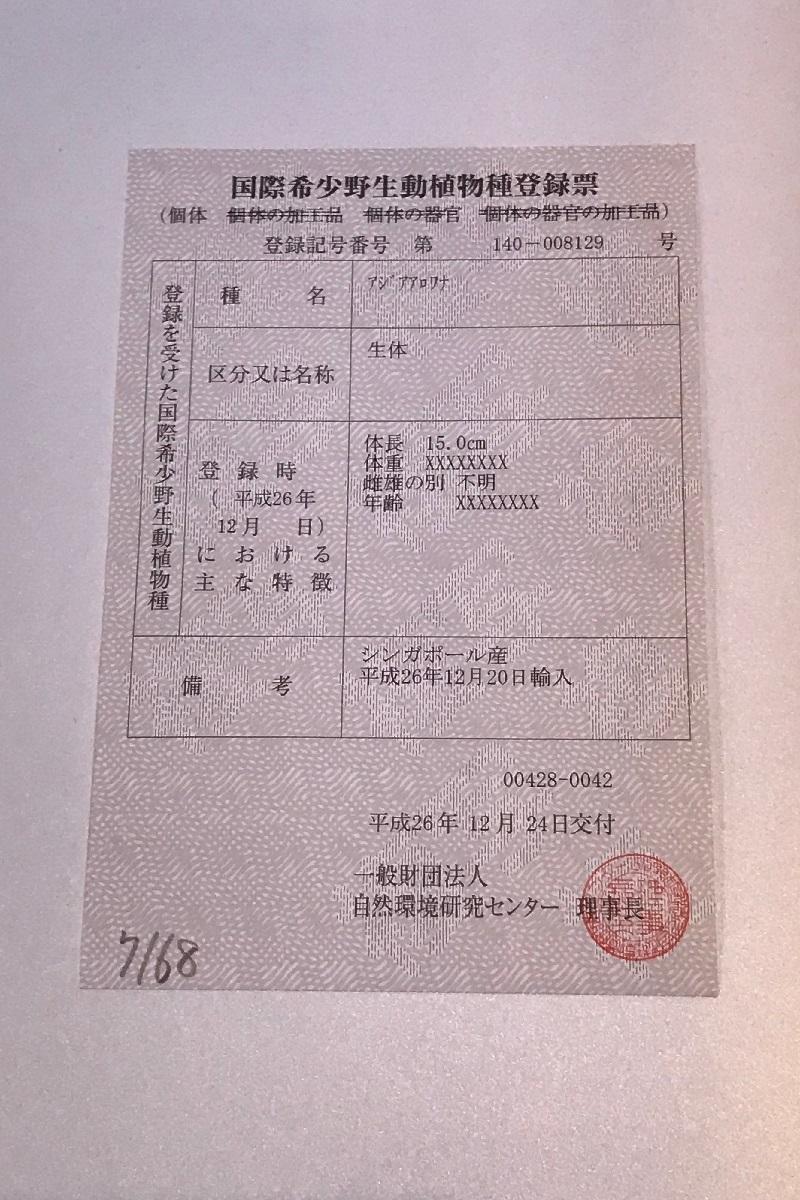 【下取1円スタート】金龍 MerLion Royal ULTIMATE_画像4