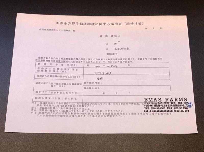 【下取1円スタート】金龍 MerLion Royal ULTIMATE_画像5