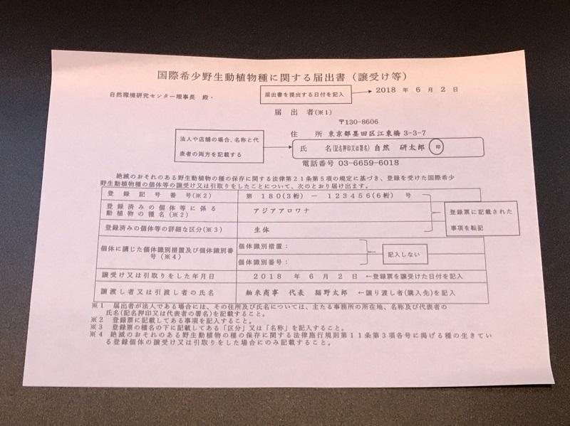 【下取1円スタート】金龍 MerLion Royal ULTIMATE_画像6