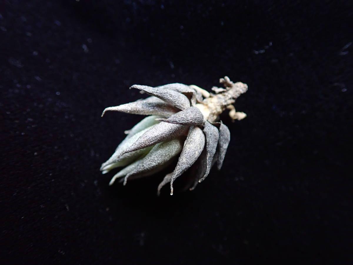 出品の植物