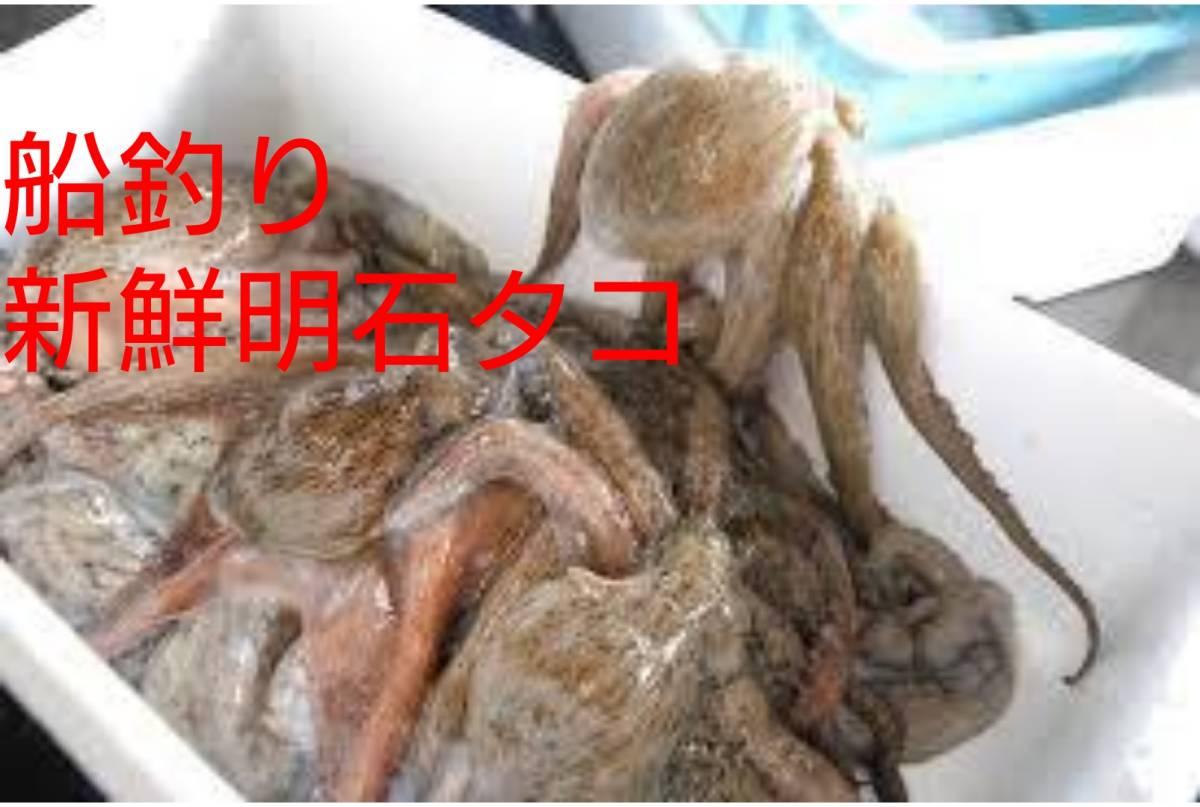 お買得 お試し価格 明石タコ マダコ 真ダコ 新子 10匹 約900グラム(お得な内臓処理済み重量です)