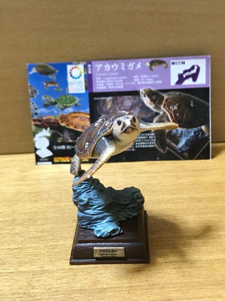 奇譚クラブ ネイチャーテクニカラー 日本のカメ アカウミガメ 開封品