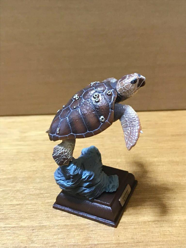 奇譚クラブ ネイチャーテクニカラー 日本のカメ アカウミガメ 開封品_画像2