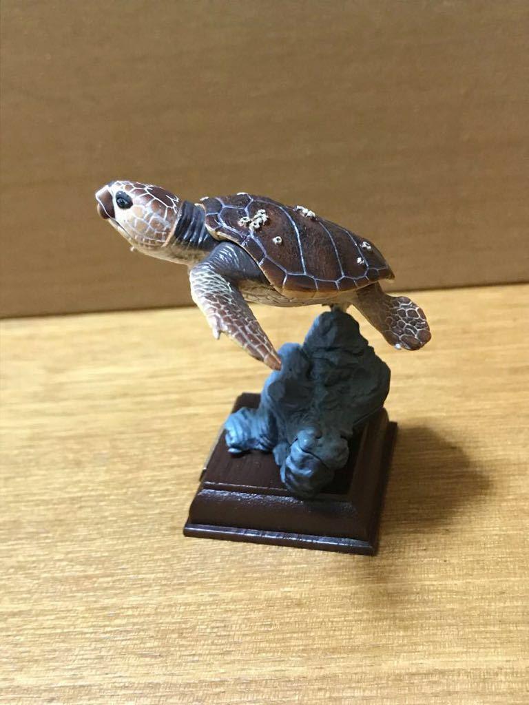 奇譚クラブ ネイチャーテクニカラー 日本のカメ アカウミガメ 開封品_画像4