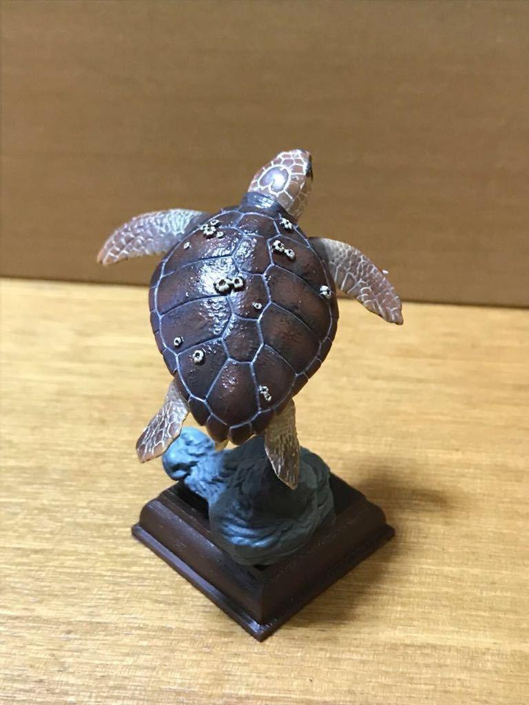 奇譚クラブ ネイチャーテクニカラー 日本のカメ アカウミガメ 開封品_画像3