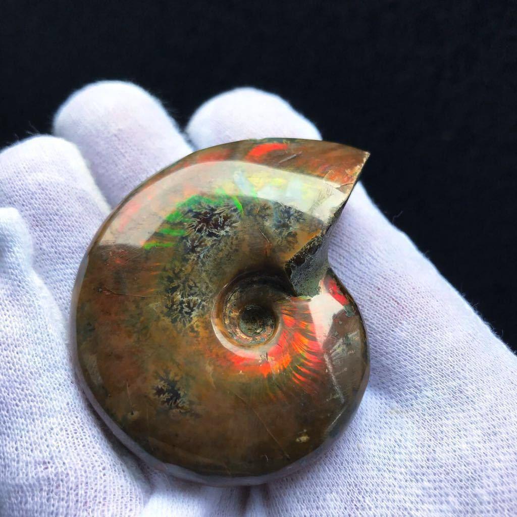 非常に綺麗なオパール化 アンモナイト化石 66g 多彩な発色が特徴的な虹色の遊色 マダガスカル産 ピカピカ磨き_画像4
