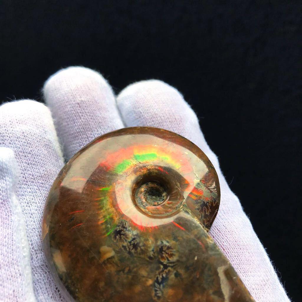 非常に綺麗なオパール化 アンモナイト化石 66g 多彩な発色が特徴的な虹色の遊色 マダガスカル産 ピカピカ磨き_画像9